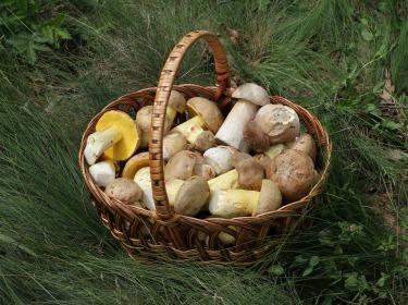 mushrooms-537974_1920