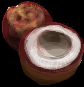 coconut-40328_1280