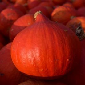 pumpkin-1658167_1280