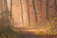 fog-1856722_1920