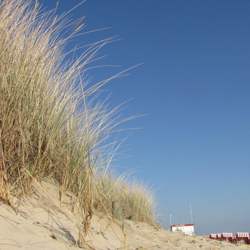 dune-1590619