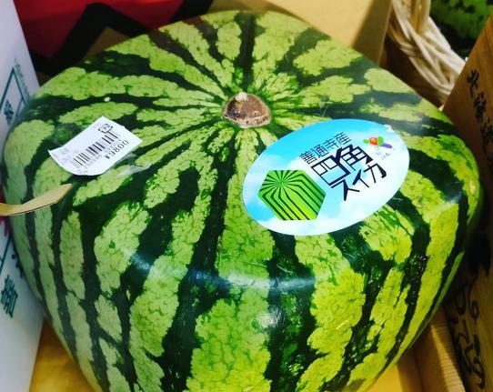 Eckige Wassermelonen aus Japan?
