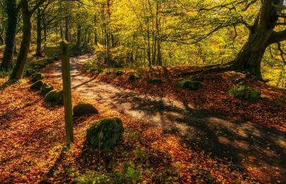autumn-light-2897162_1920