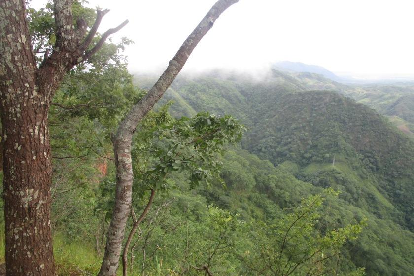 Grünes Malawi